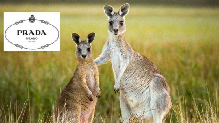 Prada kangourou