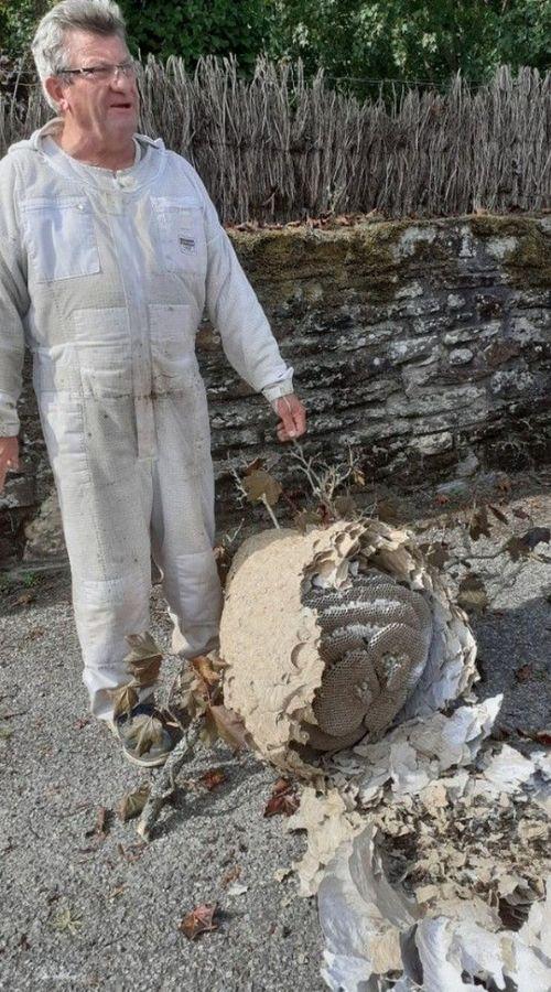 Loïc Marteil a décroché le nid dans un arbre à 15 mètres du sol.