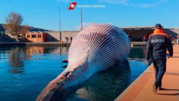 baleine italie