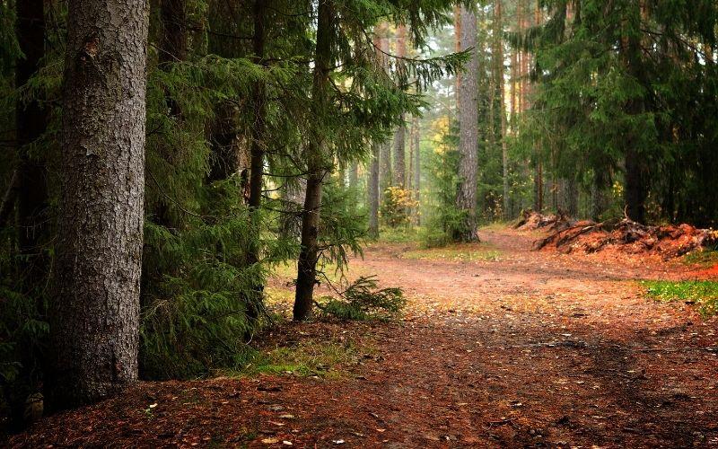 rupture de stock bois pénurie france